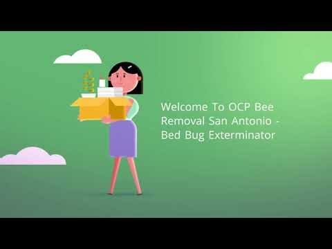 OCP Bee Removal Service in San Antonio