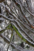 χειμώνας 33