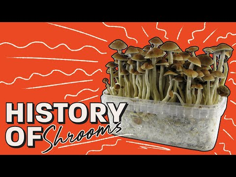 Big Mamag Shrooms   #1 Place To Buy Magic Mushrooms Online