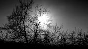 il freddo sole di gennaio