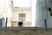 ένας γάτος ...καβγατζής