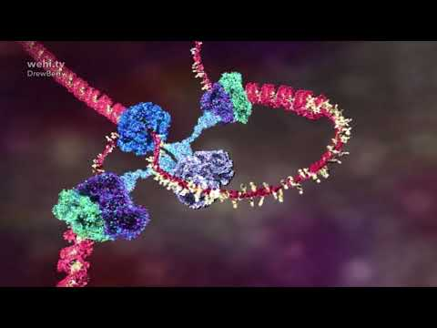 DNA animations by wehi.tv for Science-Art exhibition