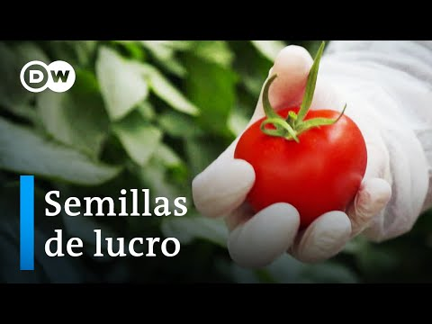 El negocio con las semillas híbridas industriales | DW Documental