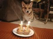 Bandit's 11th Birthday