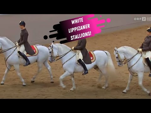 Spanish Riding School Grand Finale - White Lippizaner Stallions
