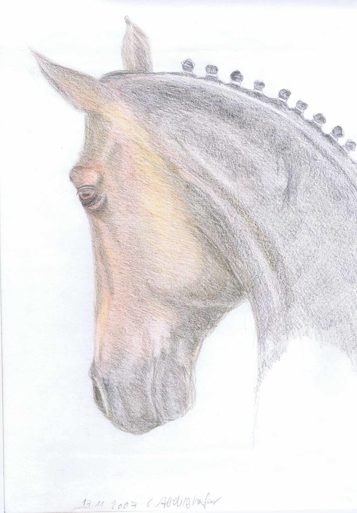 Dressage horse portrait from the side