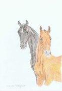A pair of foalen