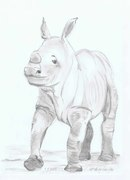 Sweet Rhino Baby