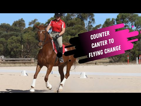 How To Ride Counter Canter to Flying Change In Dressage