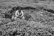 Women Farmer