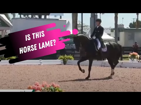 Is This Horse Lame? Lameness Lab