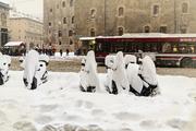elefanti di neve