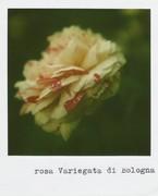 E bastava la letizia di un fiore a riportarci alla ragione. Alda Merini