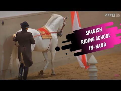 Spanish Riding School In Hand Work