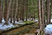 Στραβόρεμα -Δάσος Ελατιάς (Καρά Ντερέ)