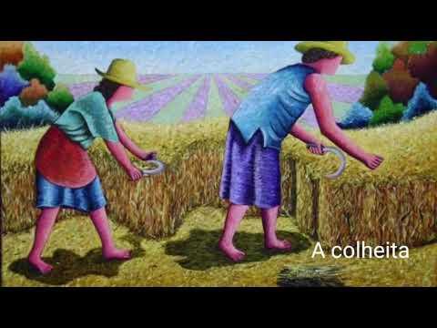 O sentido da COLHEITA