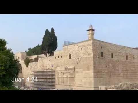 Templo   x     Adoradores