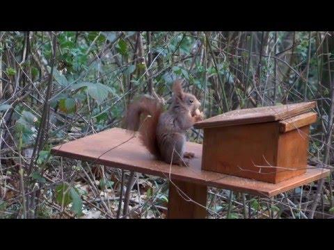 Osservatorio scoiattolo nel Parco di Montevecchia