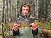 Young fella with a dandy brown.