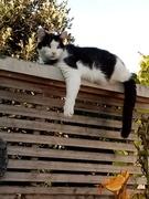 Garden Guardian On The Fence  'Orik'  025