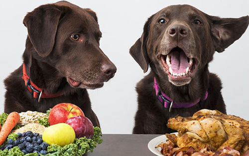 look vet approved homemade dog food recipes