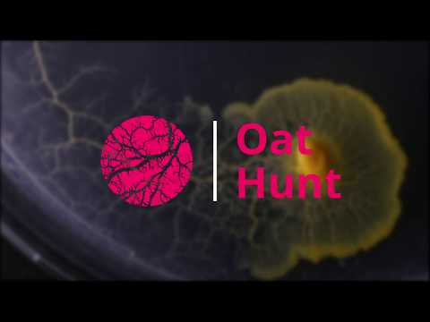 Physarum Polycephalum | Oat Hunt