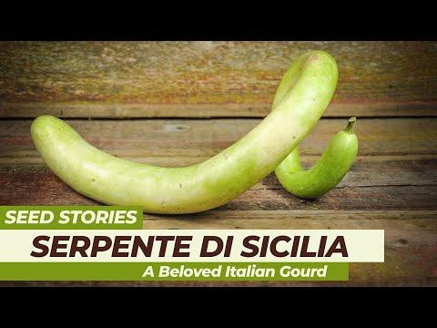 SEED STORIES | Serpente di Sicilia: A Beloved Italian Gourd