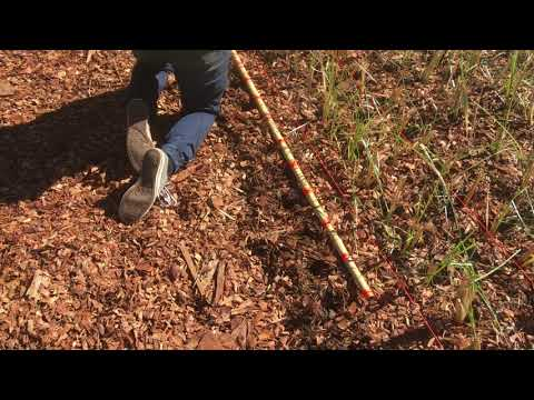 Planting out Vetiver slips in our Plantation