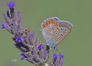 Μια όμορφη μικρή πεταλουδίτσα!
