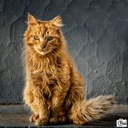 """CAT-άρα"""