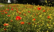 Unplanned but attractive wildflower display, July 14th '21