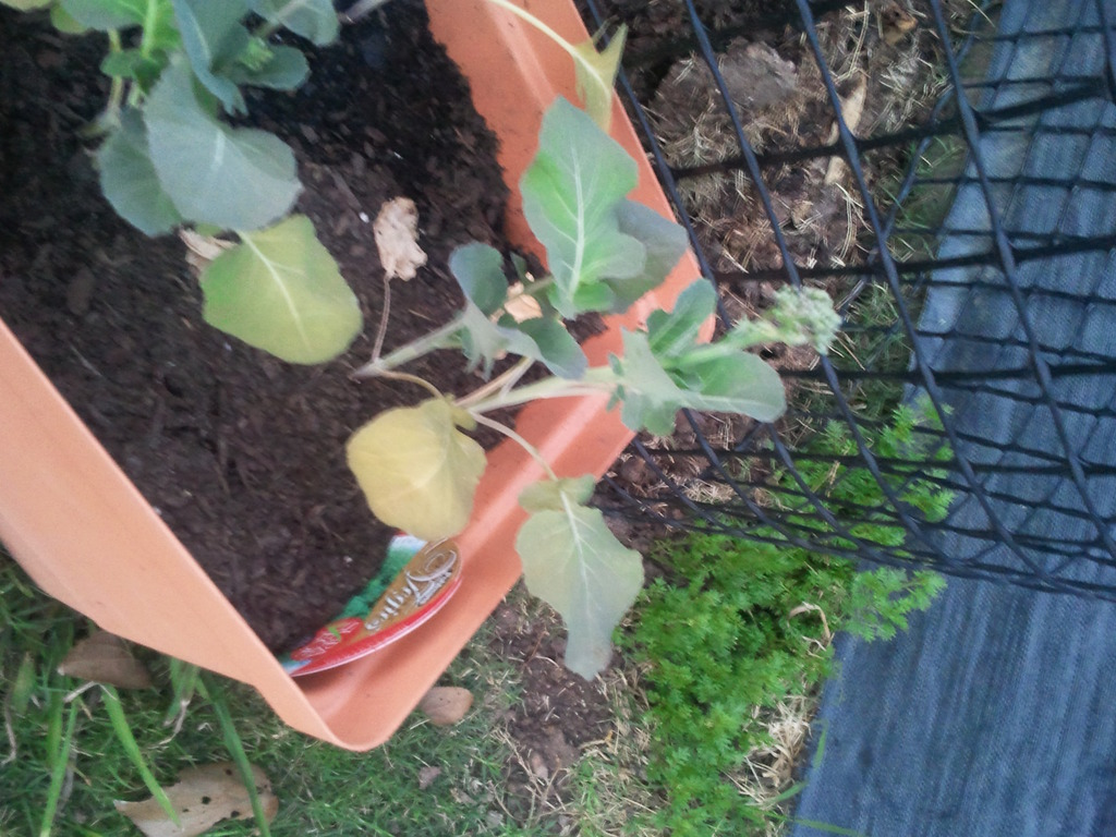 Some Of My Plants Aren T Doing So Well Anyone Know Why Photos Brisbane Local Food