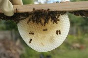 Movie Screening & Information Session About Bees
