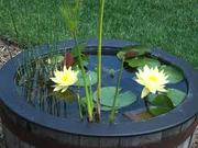 Aquatic Plants and Water Gardens