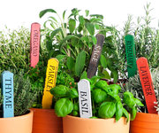 Growing Herbs - free event