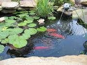 Creating and caring for a pond garden