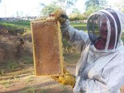 basic beekeeping course