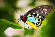 Bring beautiful butterflies back to our backyards with Join Helen Schwencke, author of Create More Butterflies