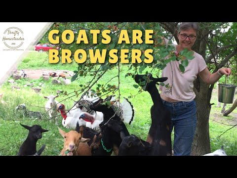 Goats are Browsers