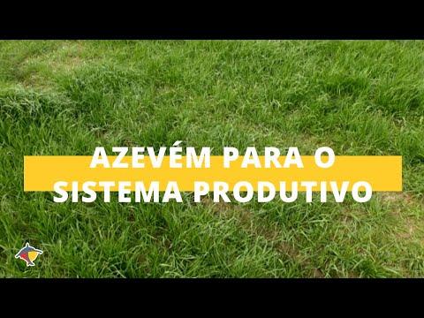 Conheça a importância do Azevém para um bom sistema produtivo | Programa Terra Sul