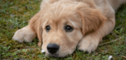 Parvo Recovery Signs