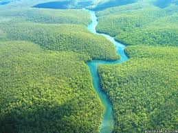 A photo from Tropic Forest of Amazon !!