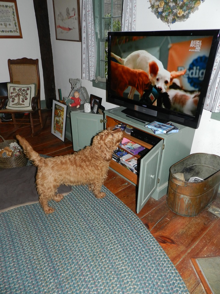 Interesting article about Dogs and TV vision - DoodleKisses com