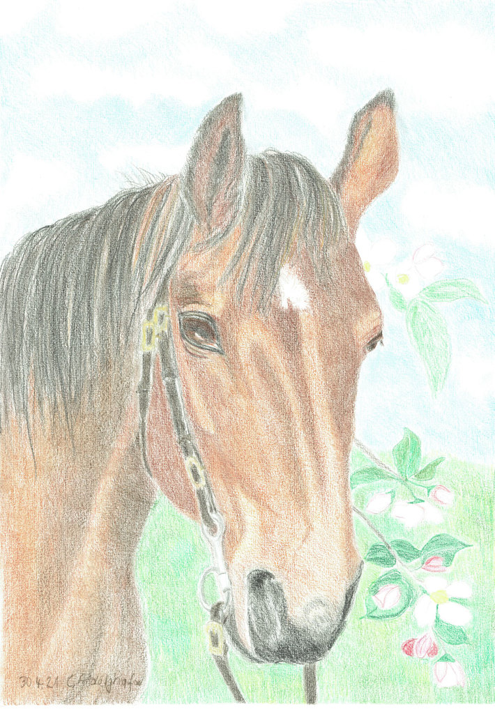 Portrait of a mare