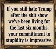 Impressive, stupidity
