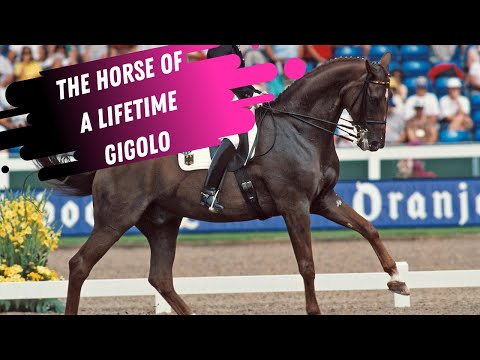 The Horse Of A Lifetime: Isabell Werth & Gigolo Grand Prix Dressage Warm-Up  Aachen - PT 2