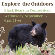 Explore the Outdoors: Black Bears in Connecticut