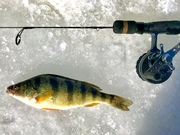 10.25'' Yellow Perch (2-2-19)