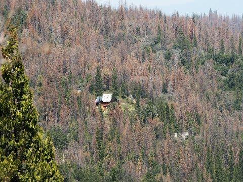 Over 102 Million Dead Trees - 2017