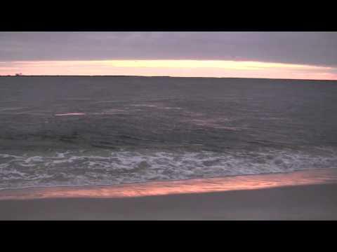 Astounding dolphin drive-along Holgate beach NJ